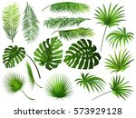 tropical green  leaves  coconut ... | Shutterstock .eps vector #573929128