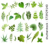 herb  leaves. set of hand drawn ... | Shutterstock .eps vector #573929140