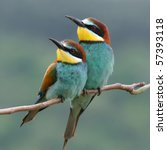Enamoured Couple Of Bee Eaters...