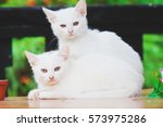 Stock photo two white kitten lying and looking at camera 573975286