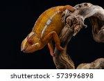 lizard chameleon isolated on... | Shutterstock . vector #573996898