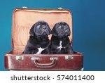 Two Dogs  Mastiff  Cane Corso ...