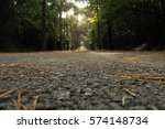 Path Through A Deep Forest Wit...