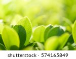 closeup nature view of green... | Shutterstock . vector #574165849