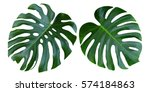 Stock photo two tropical jungle monstera leaves isolated swiss cheese plant isolated on white background 574184863
