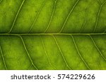 Blur Green Leaf Texture For...