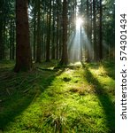 spruce tree forest  sunbeams... | Shutterstock . vector #574301434