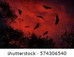Night wildlife with bats. Giant Indian Fruit Bat, Pteropus giganteus, on red sunset dark sky. Flying mouses in the nature habitat, Yala National Park, Sri Lanka. horror scene with nocturnal animals.