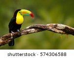 keel billed toucan  ramphastos... | Shutterstock . vector #574306588