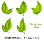 set of vector green leaves... | Shutterstock .eps vector #574377478
