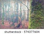 English Woodland On A Foggy...