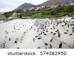 an african penguins also know... | Shutterstock . vector #574382950