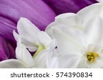 white narcissus flowers with... | Shutterstock . vector #574390834