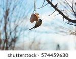 Feeding Birds In A Tree In...