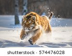 siberian tiger running in snow. ... | Shutterstock . vector #574476028