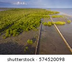 Small photo of Mangrove (Rhizophora aciculate Blume) swamp with Bamboo Sea Wall, Samut Sakhon, Upper part of the Gulf of Thailand