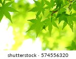 leaves of fresh green. leaves... | Shutterstock . vector #574556320