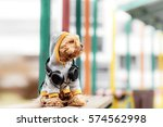 Yorkshire Terrier Sitting And...