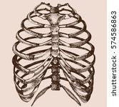 human rib cage. vector hand... | Shutterstock .eps vector #574586863