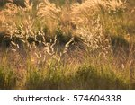 sunset and field grass with... | Shutterstock . vector #574604338