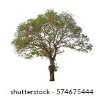 tree in summer isolate on white ... | Shutterstock . vector #574675444