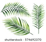 palm leaves. watercolor... | Shutterstock . vector #574692370