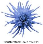 Light Blue Dahlia Flower  Whit...