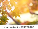 abstract yellow maple with soft ... | Shutterstock . vector #574750180