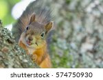 Funny Squirrel Closeup