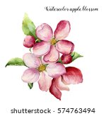 Watercolor Apple Blossom. Hand...