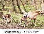 Stock photo dogs are having fun 574784494