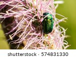 Green Rose Chafer On Pink...