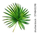 palm leaf watercolour.... | Shutterstock . vector #574843198