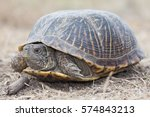 The Desert Box Turtle ...