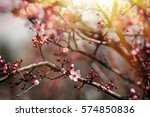 flowers and grass lit by the...   Shutterstock . vector #574850836