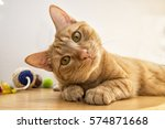 Stock photo brown cat playing relaxed on the mobile 574871668