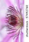 heart of a purple flower - stock photo