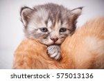 Stock photo cute kitten 575013136