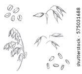 Hand Drawn Set Of Oats  Oatmea...