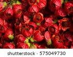 beautiful red flowers of mallow ... | Shutterstock . vector #575049730