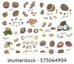 big collection of isolated... | Shutterstock .eps vector #575064904
