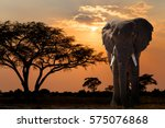 Sunset Over Acacia Tree And...