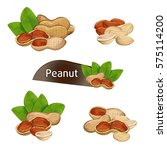 peanut kernel in nutshell with... | Shutterstock .eps vector #575114200