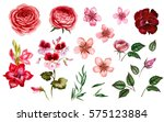pink and red flowers in... | Shutterstock . vector #575123884