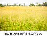 Landscape Blossom Green Grass...