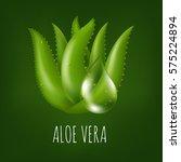 aloe vera plant    Shutterstock . vector #575224894