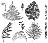 set tropical leaves sketch. | Shutterstock . vector #575230039