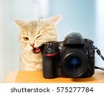Stock photo funny cat with a camera 575277784