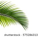 Stock photo palm leaves isolated on white background 575286313
