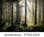beautiful forest view at... | Shutterstock . vector #575311414